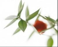 Productos de Herboristería